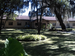 picture of The Transition House Bartow WRC for Men